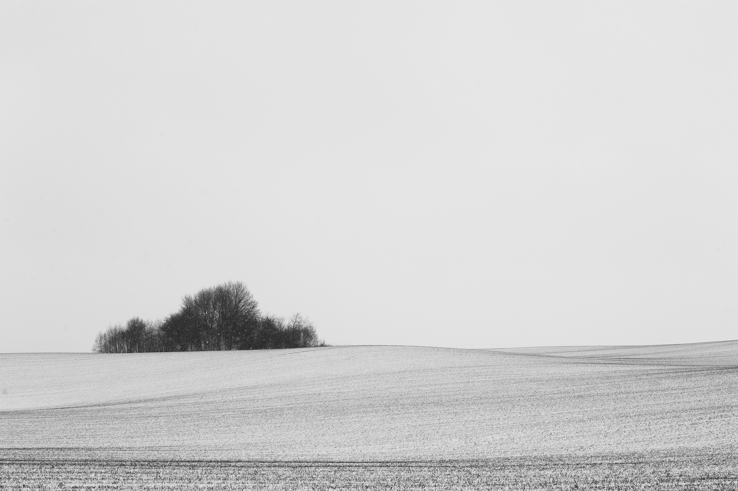 © Sigita Flaksienė